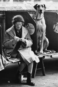 Shirley Baker photograph of lady knitting at Dog show