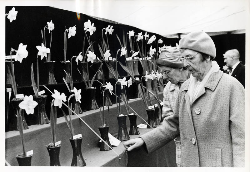 PHoto of ladies judging a flower show