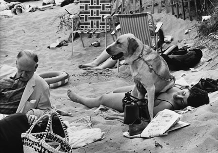 Every dog has its day at this new Shirley Baker exhibition